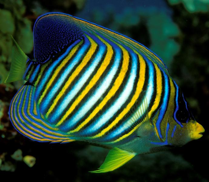 Австралия: заплывы с экзотическими рыбами