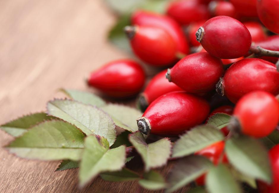 Шиповник полезные свойства ягод