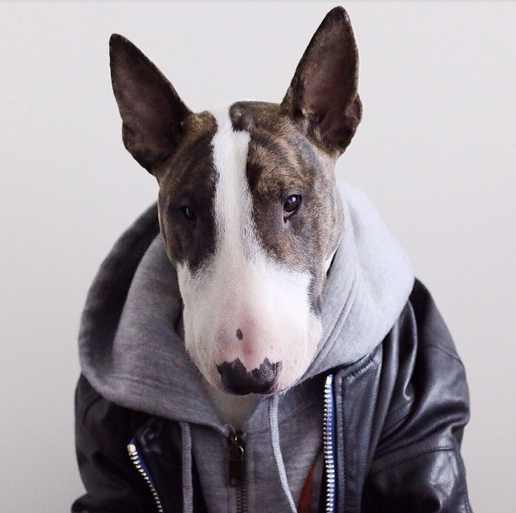 Собака Марка Джейкобса Невилл