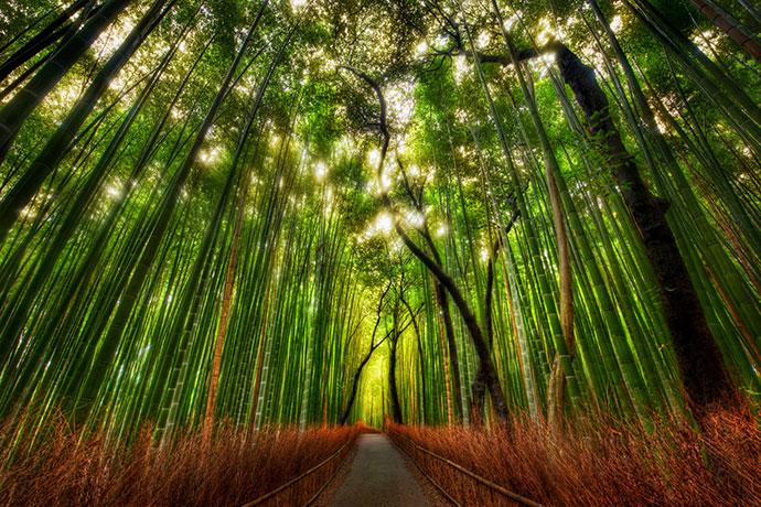 самые красивые деревья мира фото 6