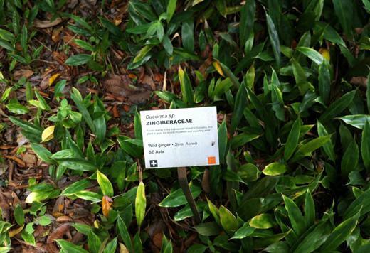 Сад специй на Пенанге