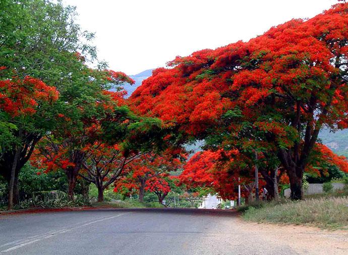 самые красивые деревья мира фото 9