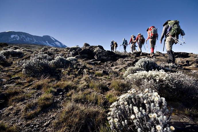 Прогулка на вершину Килиманджаро