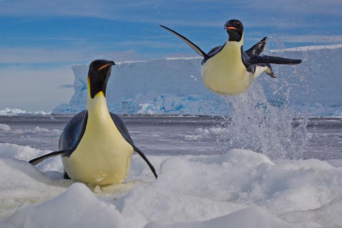 pinguin8