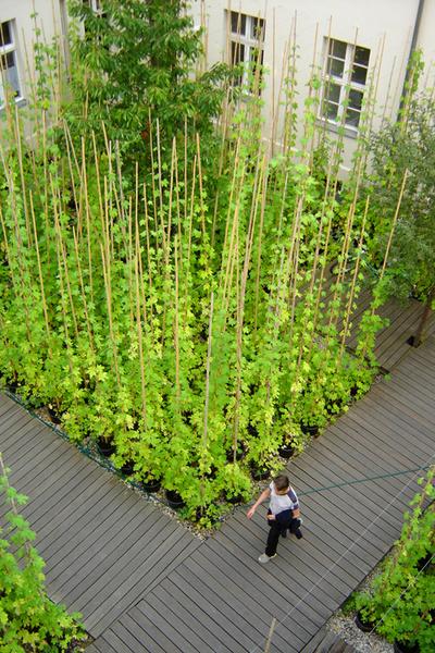 Садовые дорожки: практичные советы | галерея [3] фото [7]