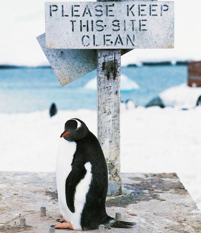 Субантарктика: прогулки с пингвинами