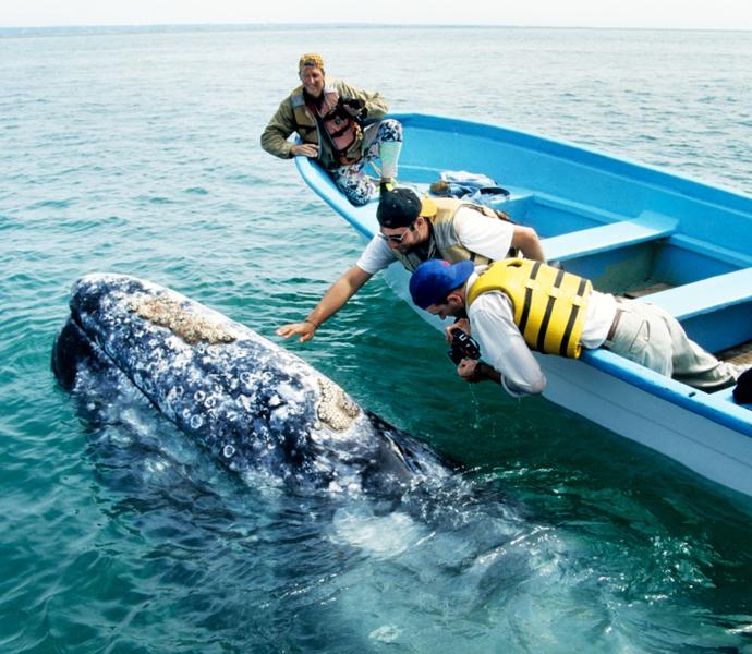 Мексика: кормление дельфинов