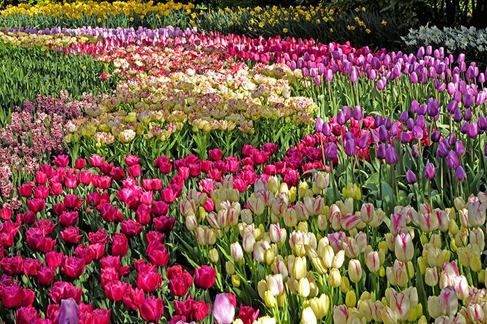 Keukenhof Gardens самые красивые сады мира фото