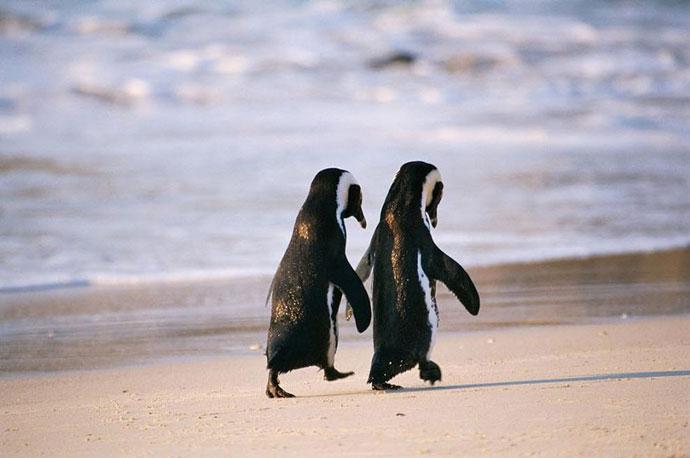 pinguin10