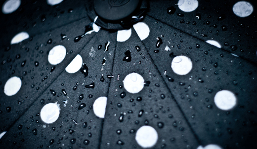 зонты 2013