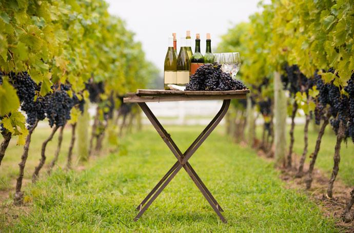 Как выбрать вино по знаку Зодиака?