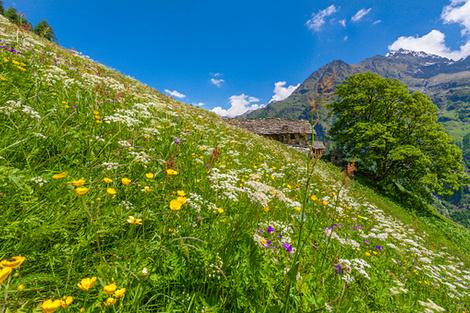 Итальянские Альпы: 10 главных достопримечательностей долины Аосты | галерея [8] фото [2]