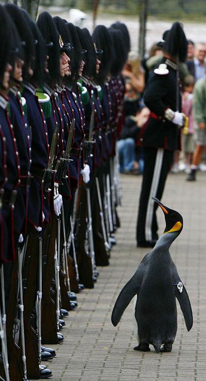 pinguin7
