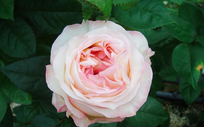 Модный букет: советы флориста 3