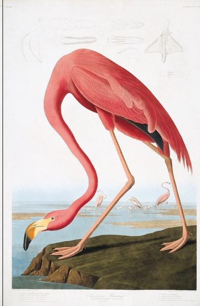 Новую коллекция обоев ручной работы от de Gournay | галерея [1] фото [3]