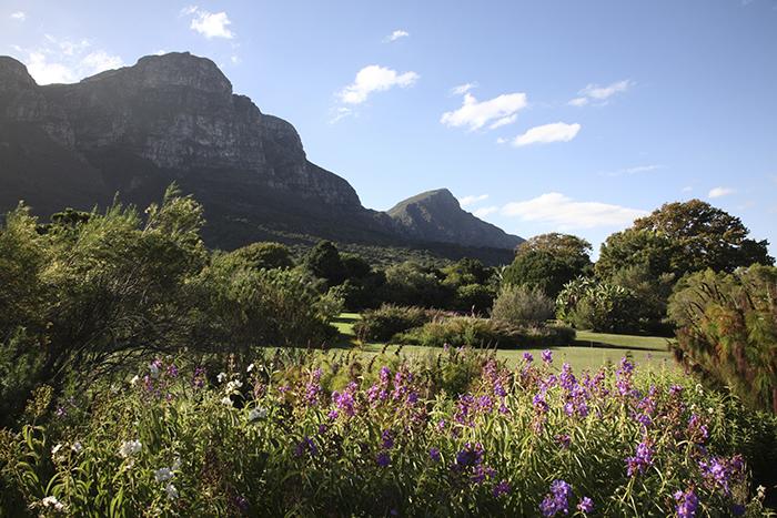 Национальный ботанический сад Kirstenbosch самые красивые сады мира фото