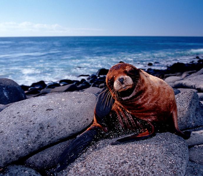 Галапагосские острова: снорклинг с морскими котиками