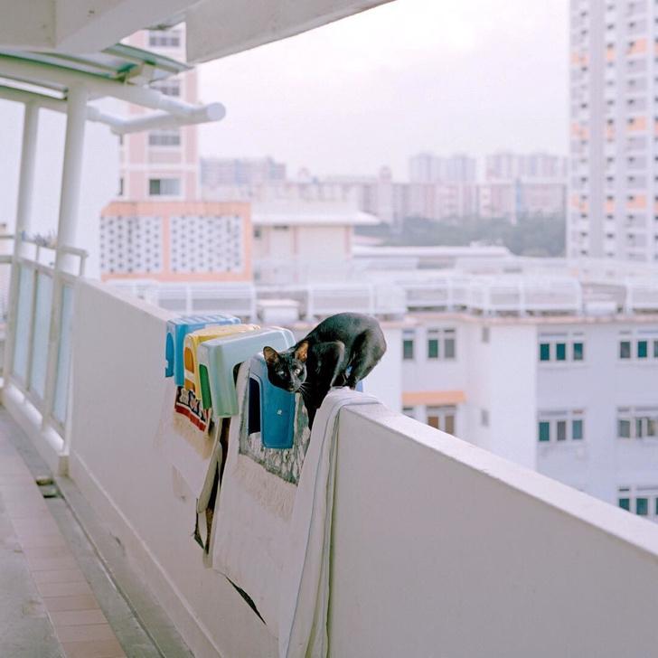 Инстаграм недели: Сингапур, который вы еще не видели (фото 2)
