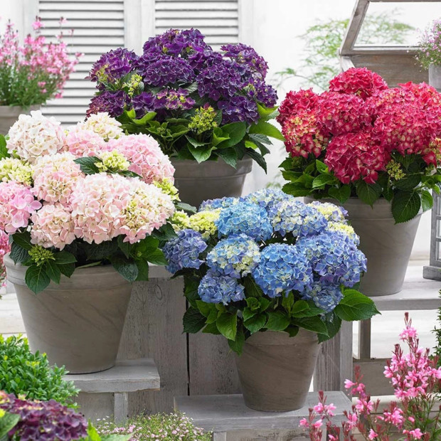 Чем заняться дома: сажаем цветы на балконе (фото 4)