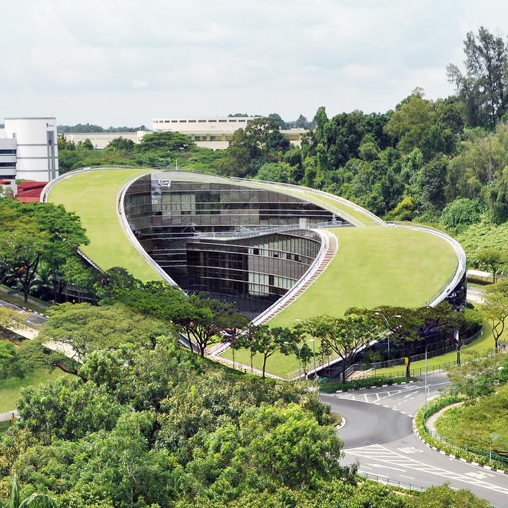 Пятый фасад: зеленые крыши (фото 13)