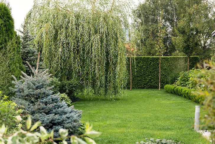10 самых модных растений для сада (фото 12)