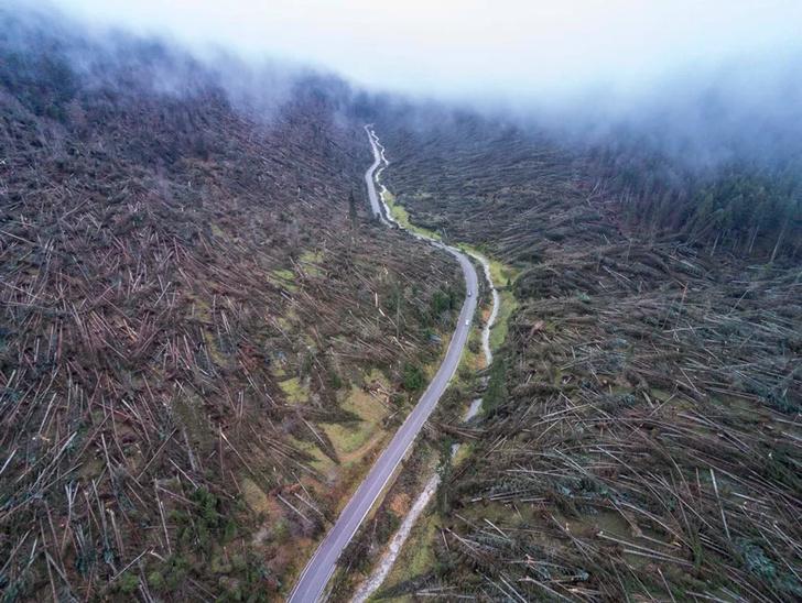 «Мертвый лес» Стефано Боэри в Сиракузах (фото 6)