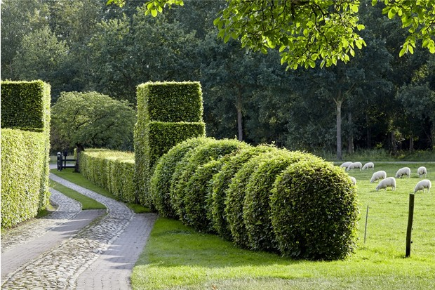 Сад ландшафтного дизайнера Пита Удольфа (фото 5)