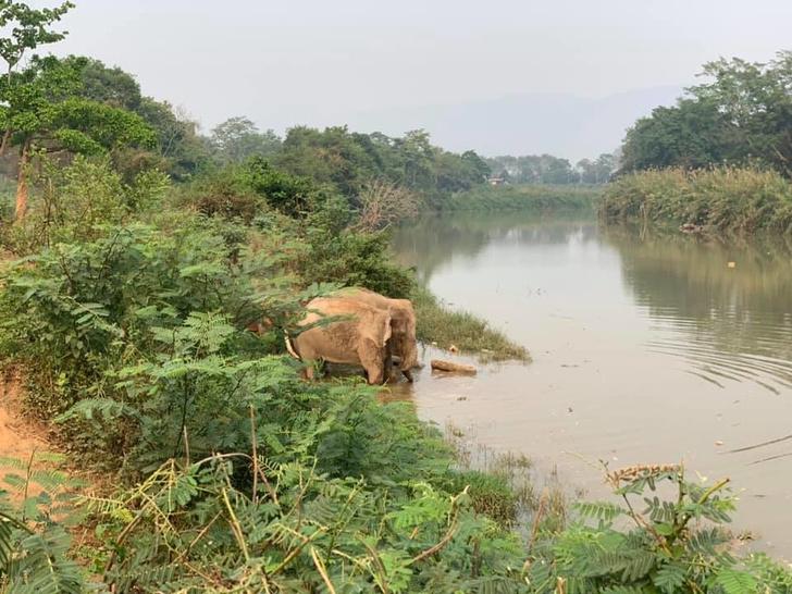 Прямые трансляции из заповедника слонов (фото 2)