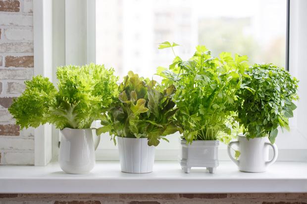 5 свежих трендов в озеленении интерьера (фото 7)