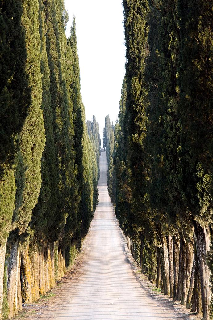самые красивые деревья мира фото 7