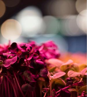 RHS Chelsea Flower Show 2019: сад будущего Тома Диксона и ИКЕА (фото 7.2)