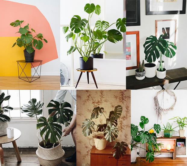 Домашние растения и знаки зодиака