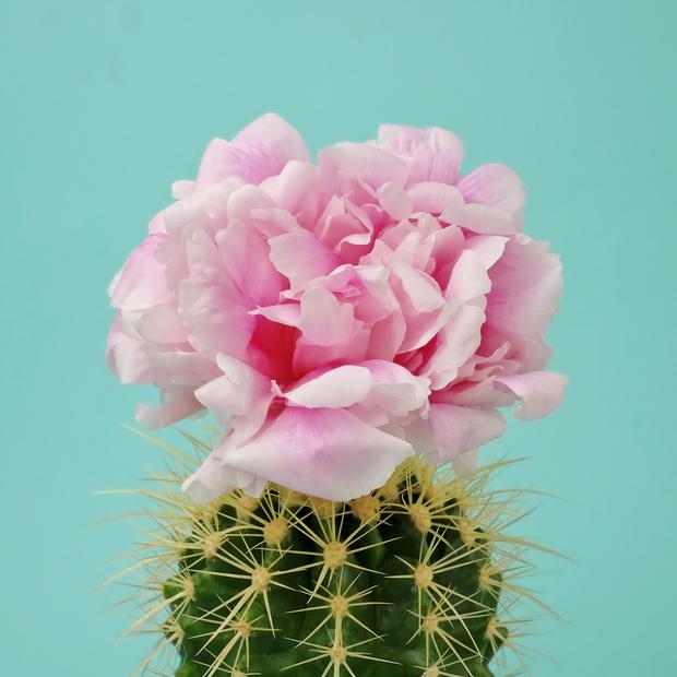 Я уколов не боюсь: косметика с экстрактом кактуса (фото 1)