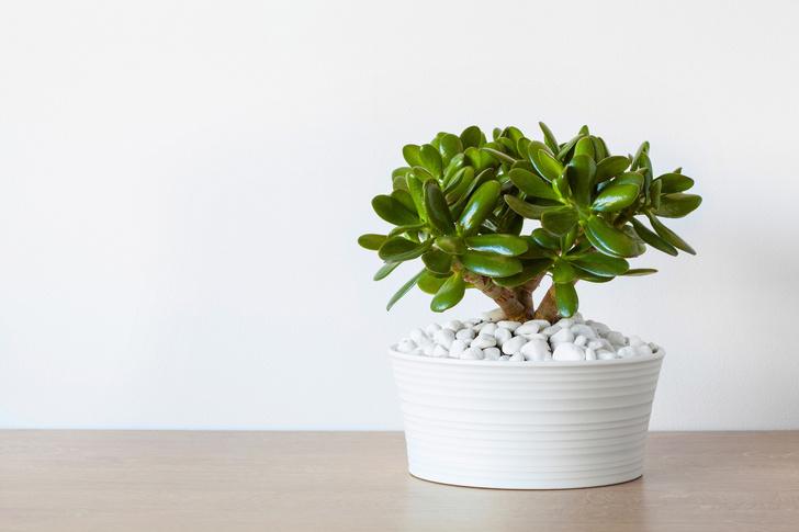6 растений для рабочего места (фото 6)