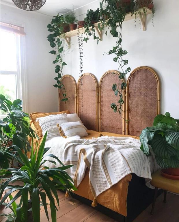 Новое растение в доме: 11 советов (фото 6)