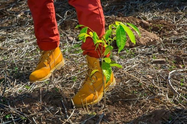 В Сокольниках пройдет «День Земли» вместе с Timberland