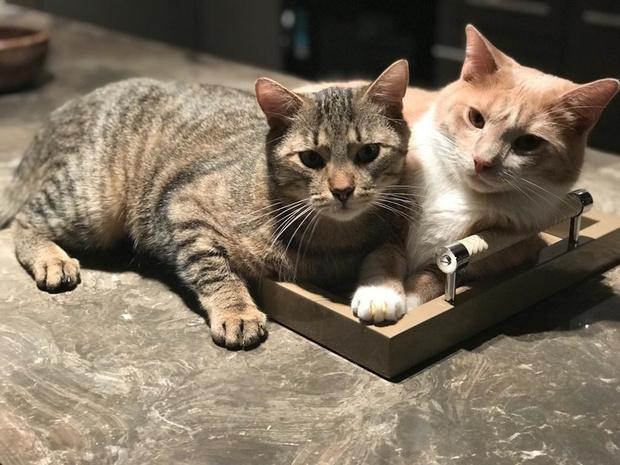 Квартира 85 м² для любительницы искусства и двух котят (фото 22)