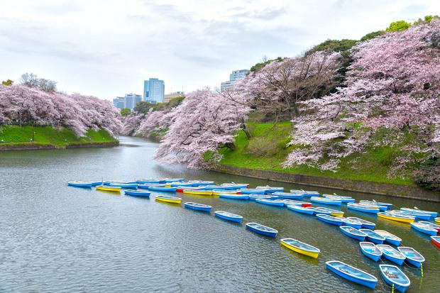 Азия из первых рук: интересные факты о Японии, которые стоит знать (фото 8)