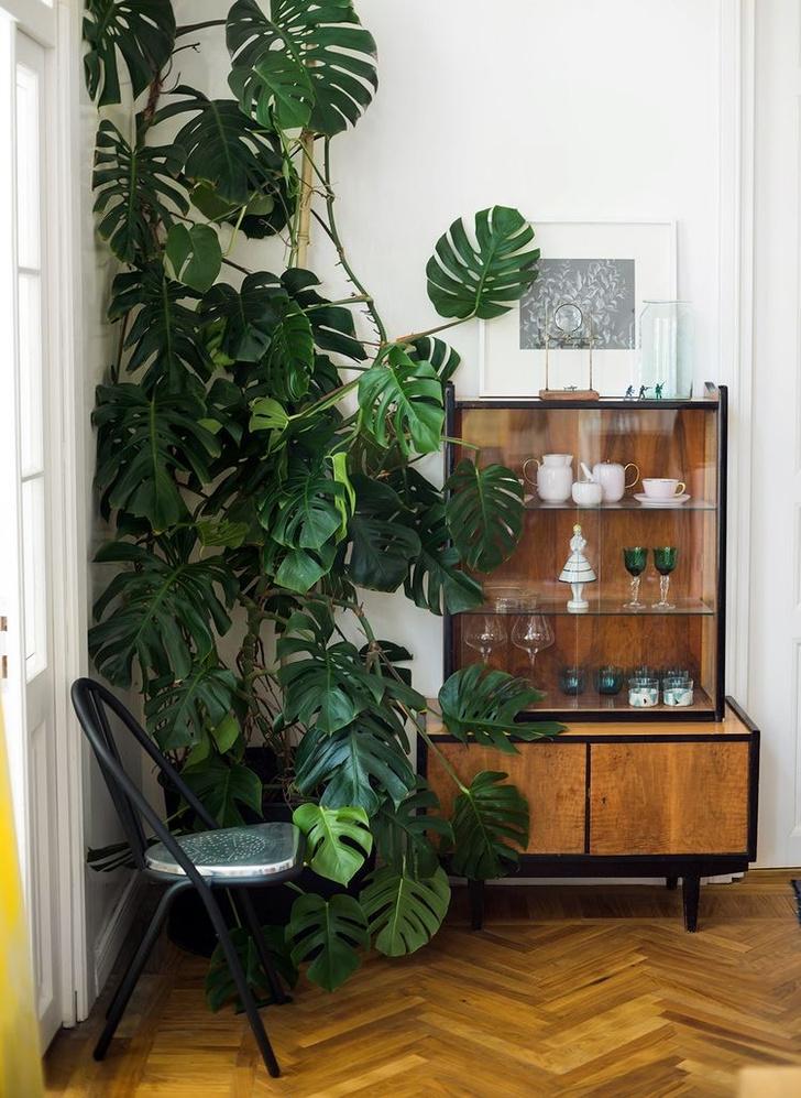 Растения в интерьере: советы дизайнера Ильи Гульянца (фото 6)