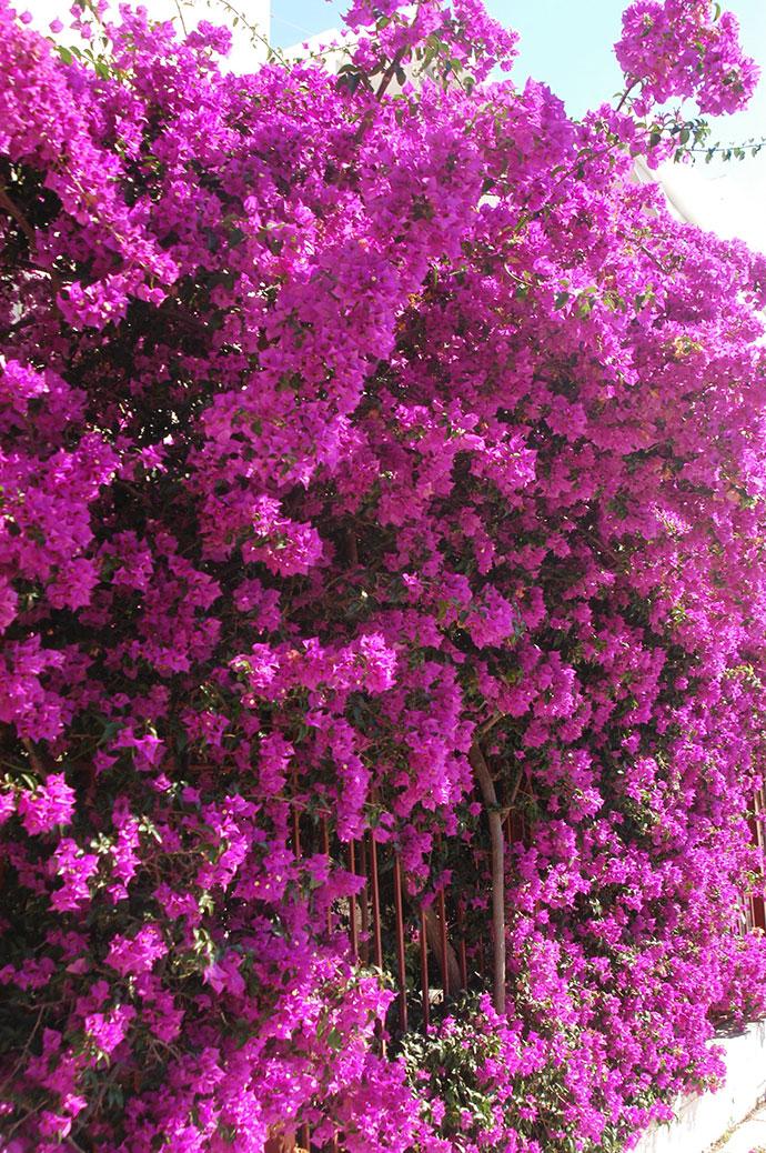 самые красивые деревья мира фото 8