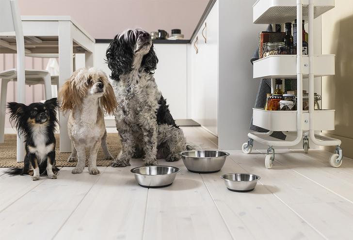 Коллекция ИКЕА для кошек и собак (фото 2)