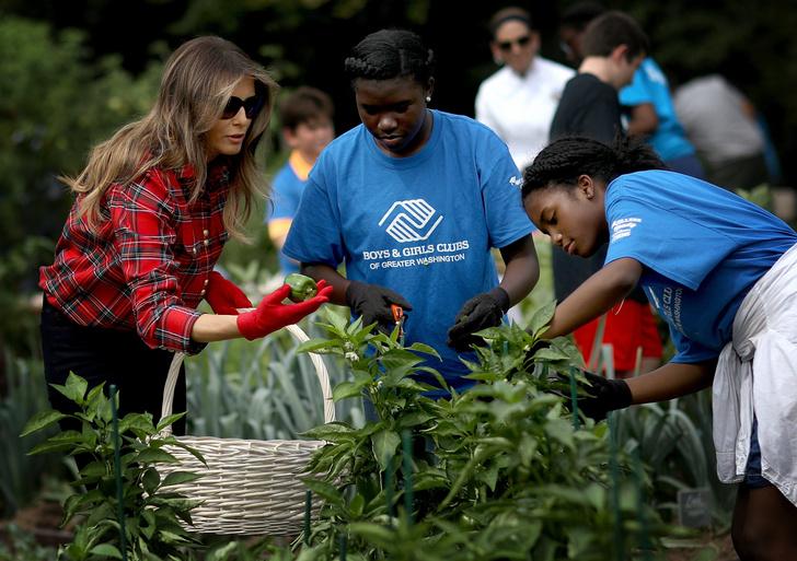 Мелания Трамп разбила огород на территории Белого дома фото [1]
