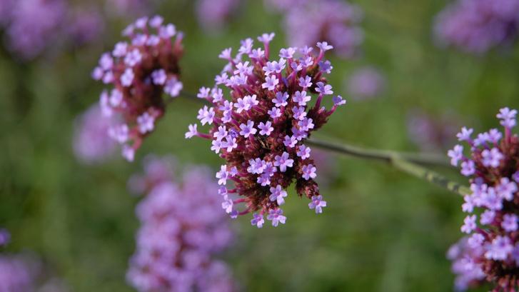 Ароматерапия: запахи, которые взбодрят, успокоят и подарят радость (фото 10)