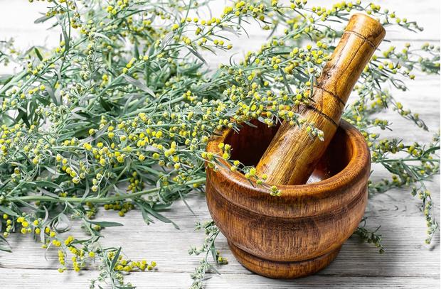 Травяной гороскоп: лечебные травы и знаки Зодиака (фото 36)