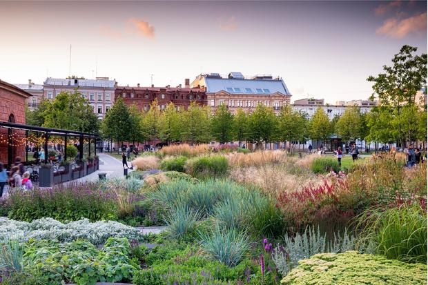 Многая лета: сад трав в Санкт-Петербуре по проекту бюро «Мох» (фото 0)