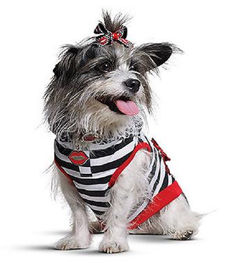 Гвен Стефани запустила линию одежды для собак