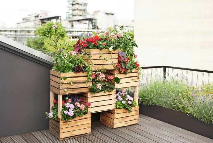 Клумба в ящике: полезные советы для дачи и балкона (фото 9)