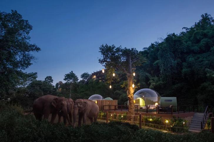 """Отель-""""пузырь"""" в джунглях Таиланда (фото 2)"""