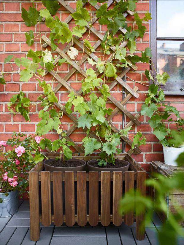 Растения на балконе: правила выживания (фото 5)