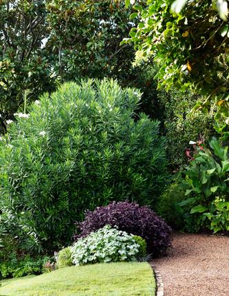 Дом и сад Бронте в центре Сиднея (фото 6.1)